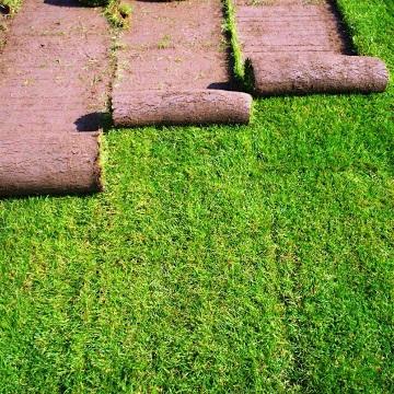 Укладка газона в Туле под ключ по низкой цене
